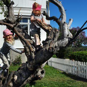 Bilde av 2 barn som klatrer i et tre i barnehagens uteområde.